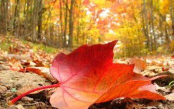 autumn-300x225